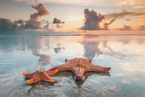 RD_Farm_Starfish