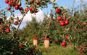 agriculture-farming-R&D-tax-credits