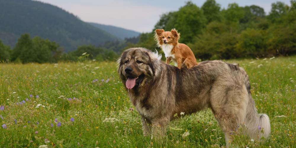 RD_Dogs_Social
